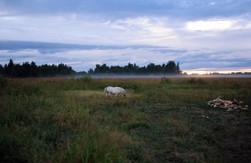 А по вечерам, после дождей, поле застилает туман. И в тумане гуляют лошади