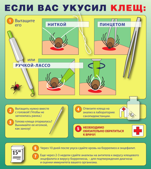 Что делать, если укусит клещ
