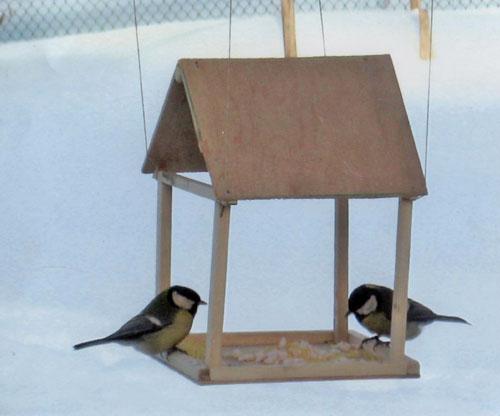 Файл:Помощь птицам.jpg.