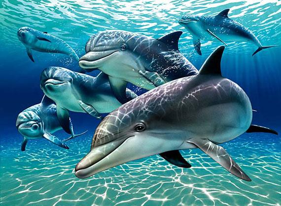 sunlit_dolphin_pals_1A