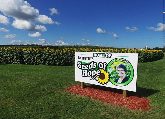 babbettes-seeds-hope-cancer-sunflower-four-miles-5