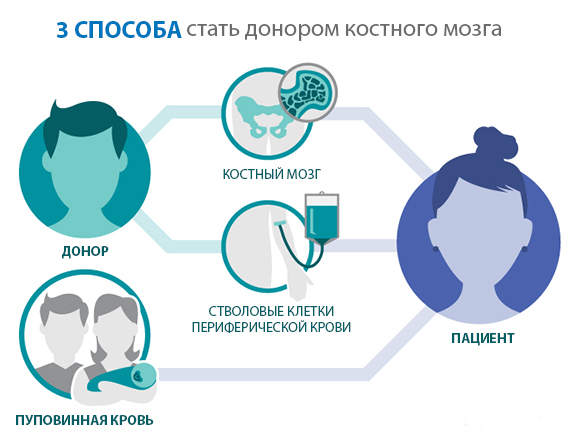 сперма из костного мозга