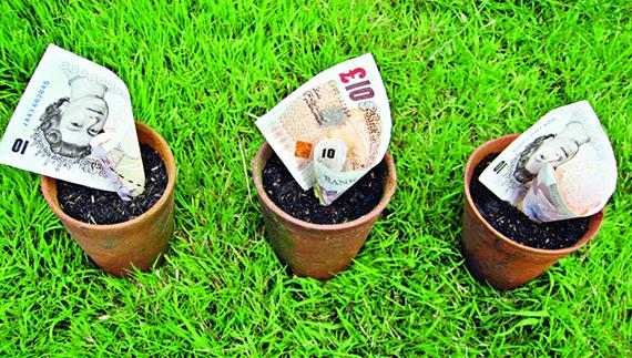 MONEY-TREE-LANDSCAPE