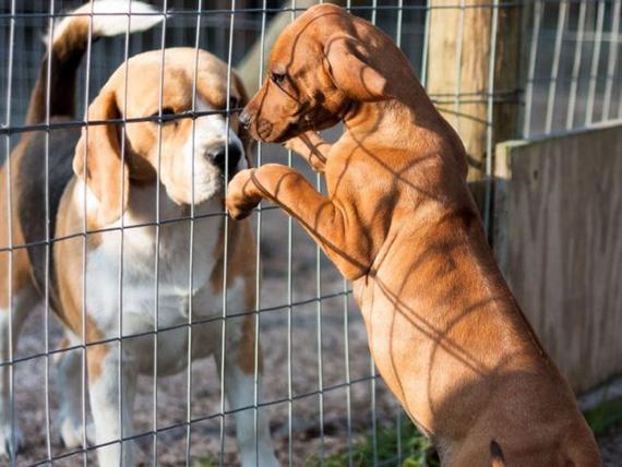 Dog_shelter_10-650x488