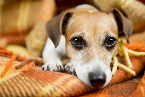 Dog_shelter_121-650x434