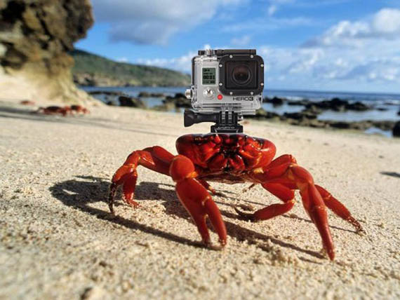 crabe-c3a9quipc3a9-gopro