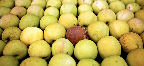 rotten-apple-1725x810_12112