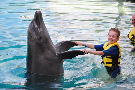 dolphin-handshake-seth-2