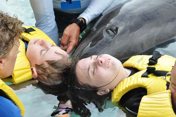 dolphin-therapy-heads