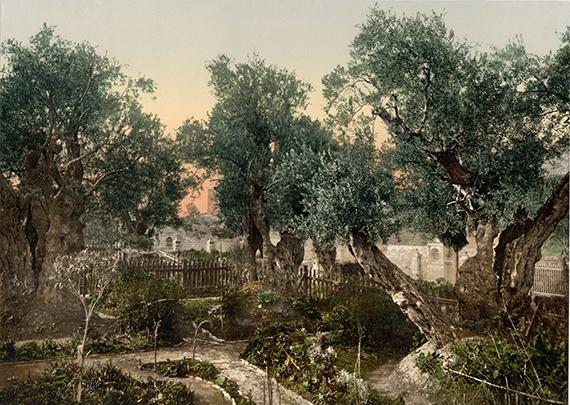 garden-of-gethsemane