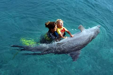 Дельфинотерапия для детей и взрослых: польза, лечение, результаты