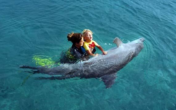 header_Dolphin