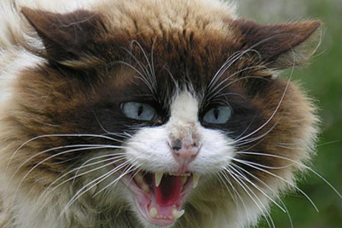 Царапины от кошек - чем лечить как заживлять