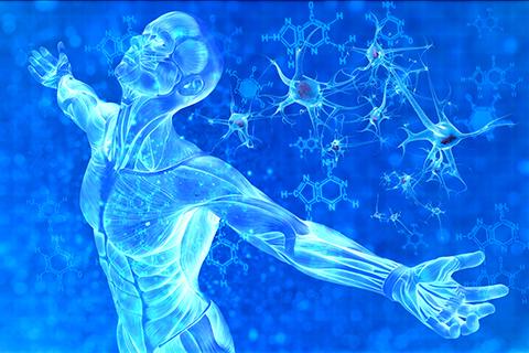 Спинной мозг восстановление после травмы реабилитация