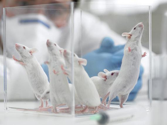 web-stem-cells-rex