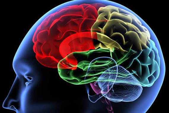 braingraphic